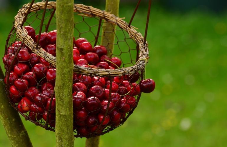 pannier de cerises