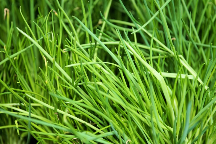 chives-2460048_1920