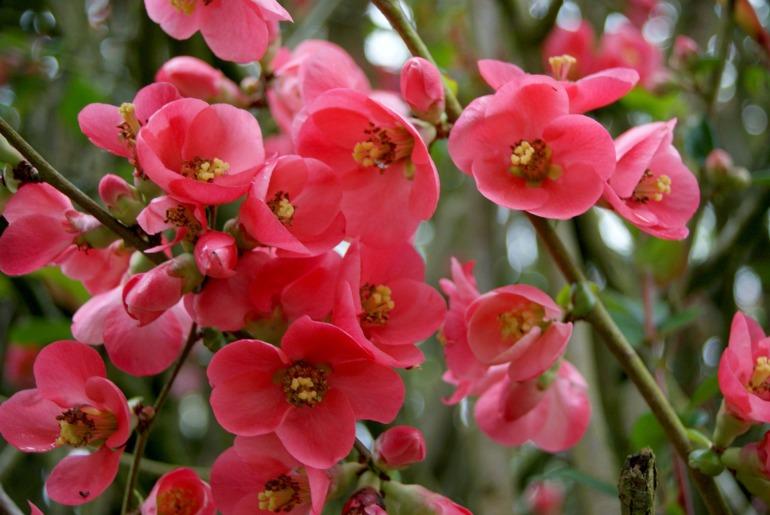 flower-419039_1920