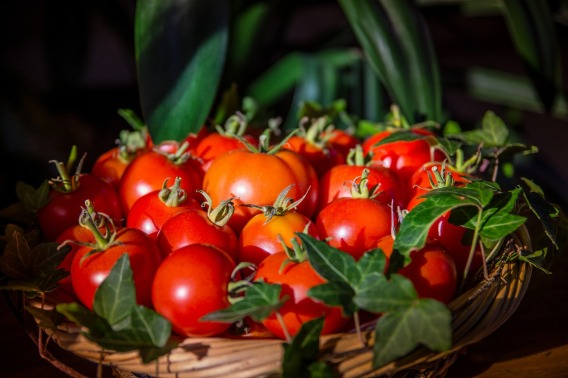 panier de tomate