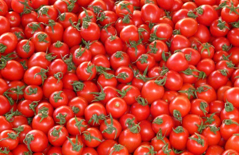plein de tomates
