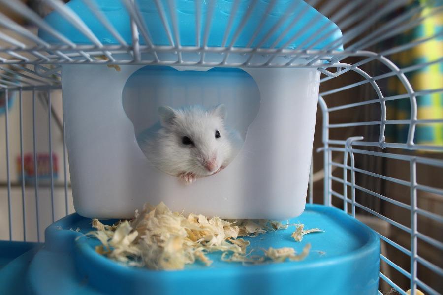 Nos astuces confort pour nos animauxd'intérieur