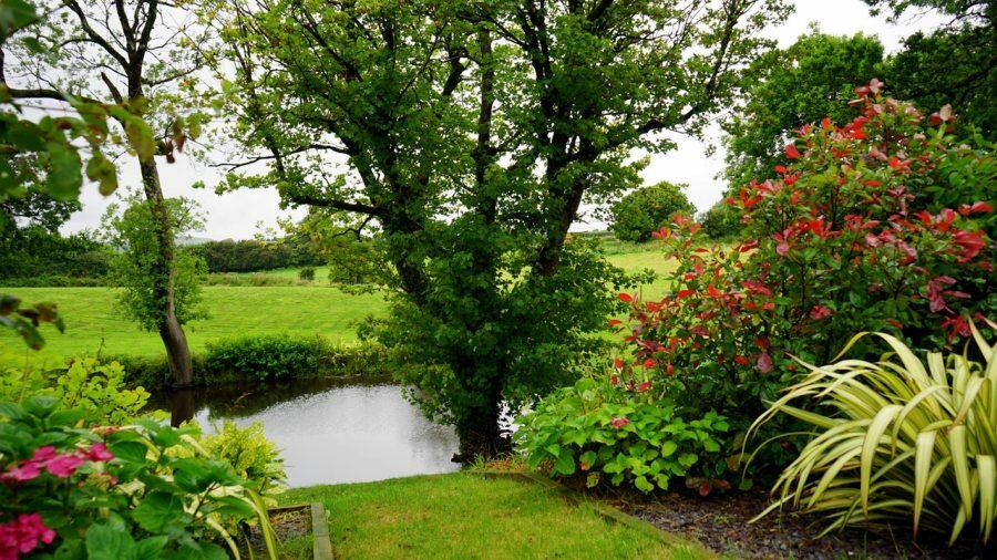rivière dans jardin
