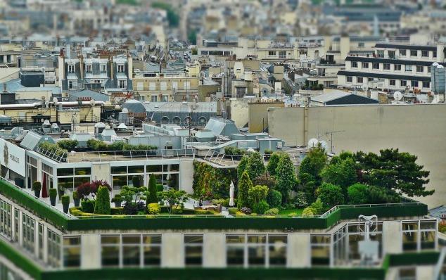 terrasse de toit verte