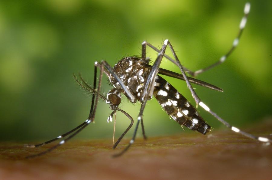 Nos conseils pour éviter de se faire piquer par des moustiques durantl'été