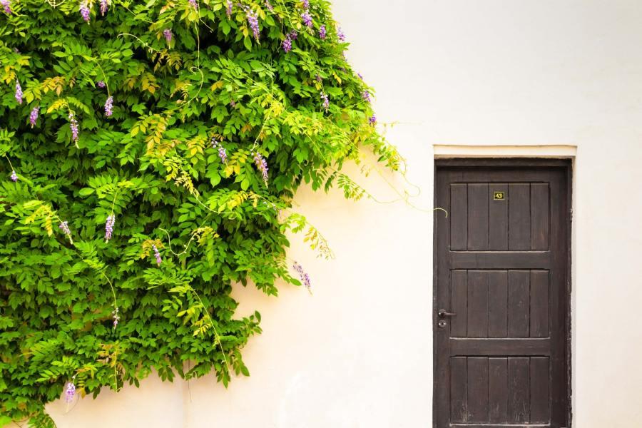 Qu'avez-vous comme choix pour votre porte d'entrée?