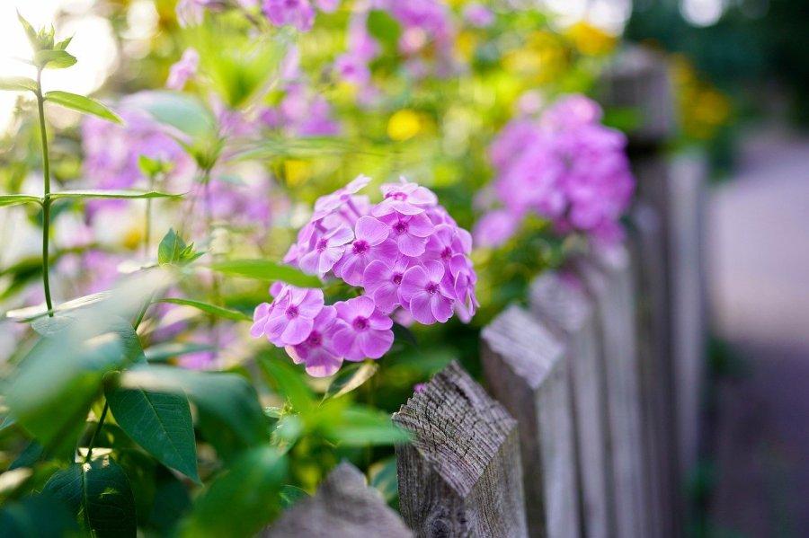 Comment choisir son grillage et sa clôture de jardin?