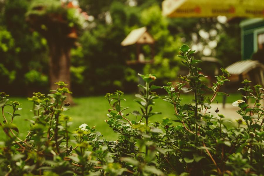 Pourquoi entretenir son jardin régulièrement?