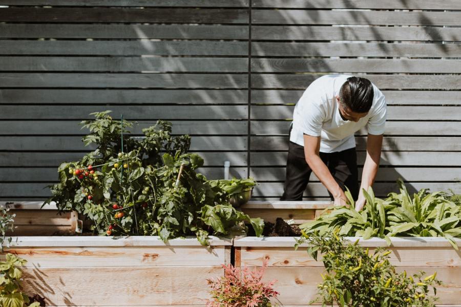 Quelles utilisations du savon noir pour les plantes de jardin?
